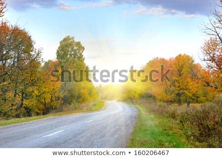 Jesienny widoku przydrożny drzew starych mur Zdjęcia stock © olandsfokus