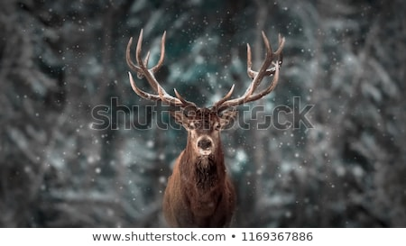 Tél tájkép szarvas hó karácsony fa Stock fotó © -Baks-