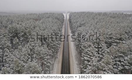 тропе лес зеленый небе дерево дороги Сток-фото © ankarb