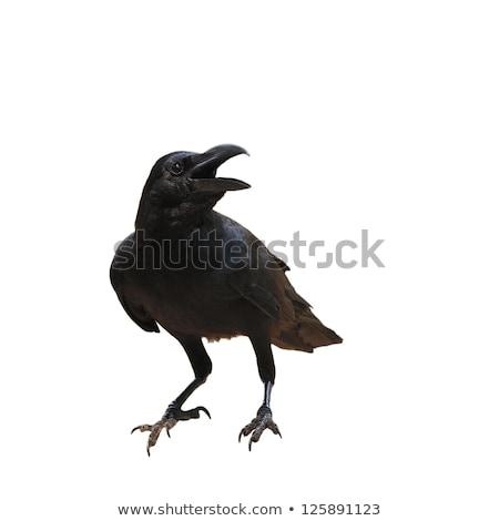 Corvo pássaro imagem laranja azul desenho Foto stock © cteconsulting