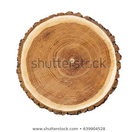 Duży drzewo ilustracja drewna lasu charakter Zdjęcia stock © bluering
