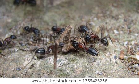 クモ アリ 森 実例 森林 自然 ストックフォト © bluering