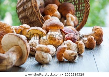 fresh autumn mushroom Stock photo © artush