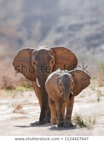 Fil ebeveyn genç bebek hayvanlar hayvan Stok fotoğraf © THP