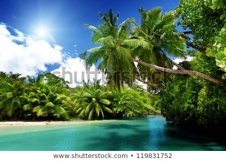 красивой пейзаж Palm растений иллюстрация трава Сток-фото © bluering