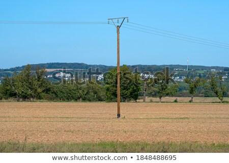 wooden power poles on the empty field stock photo © capturelight