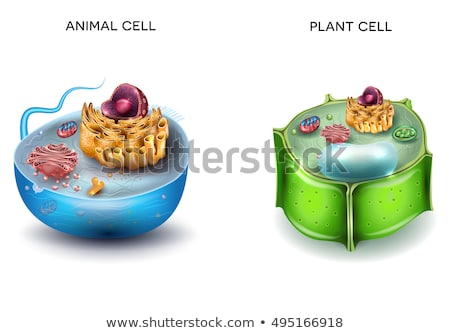 animal cell and plant cell structure cross section detailed col stock photo © tefi