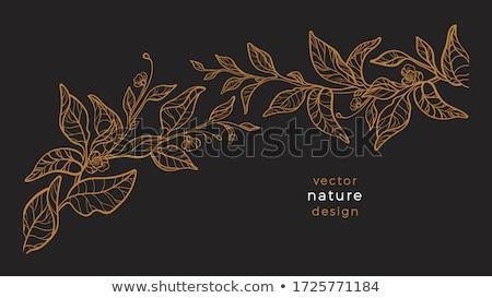 зеленый · чай · листьев · вектора · реалистичный · иллюстрация · изолированный - Сток-фото © blackmoon979