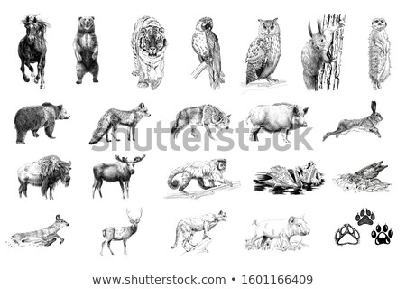 Stock photo: animals icon pencil drawing