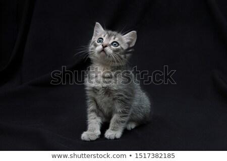 Kiscicák fekete szín fiatal állat bizalom Stock fotó © IS2