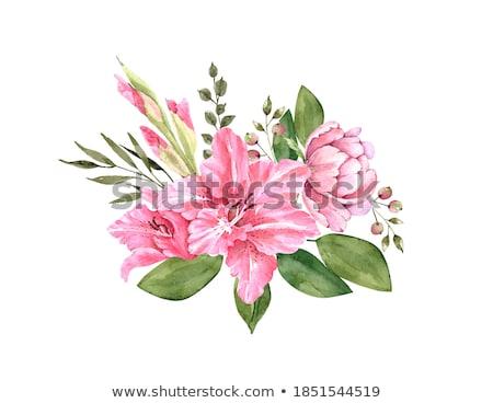 beautiful lily painted Stock photo © frescomovie