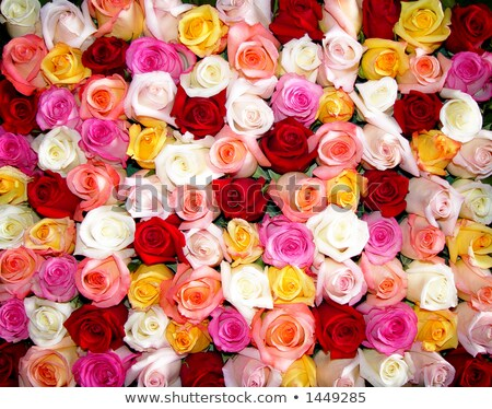 Flowers tightly packed together Stock photo © IS2