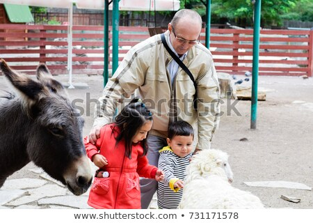 girl feeding sheep at the zoo stock photo © is2