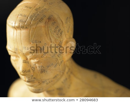meridian lines on an acupuncture figurine stock photo © monkey_business