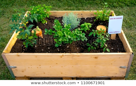 Container vegetables gardening. Vegetable garden on a terrace. Herbs, tomatoes seedling growing in c Stock photo © Virgin