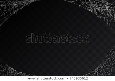 Beyaz yırtılmış örümcek ağı siyah beyaz siyah dizayn Stok fotoğraf © orensila