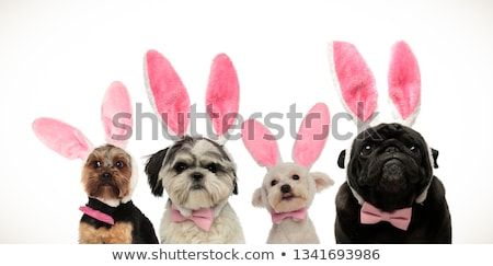 team of four cute dogs wearing halloween costumes stock photo © feedough