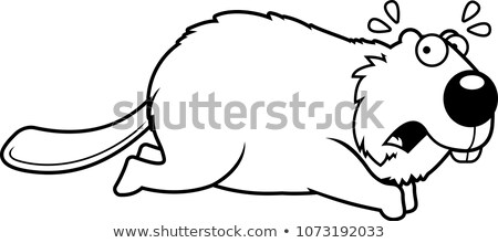 Desenho animado castor corrida longe ilustração Foto stock © cthoman