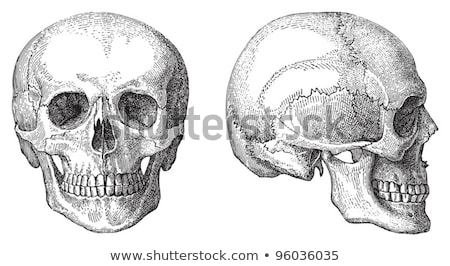 insan · kafatası · gözler · sigara · örnek · beyaz - stok fotoğraf © orensila