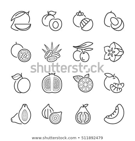Mangisboom mango ingesteld vector exotisch tropische Stockfoto © robuart