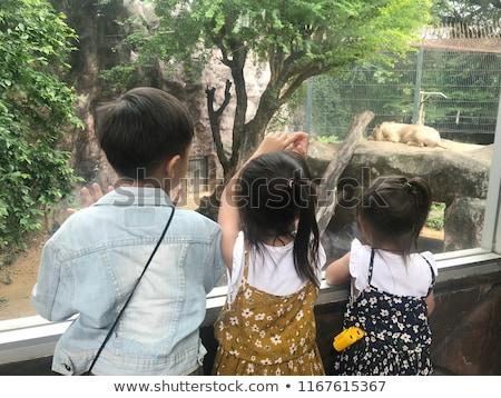 Little boy looking at little lion through glass in zoo Stock photo © galitskaya