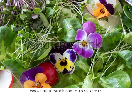 Detail of a salad with edible pansies and fresh broccoli and kale microgreens Stock photo © madeleine_steinbach