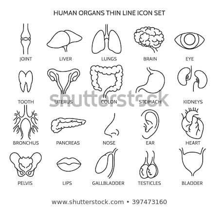 Human organ. Bladder icon on black and white background Stock photo © Imaagio
