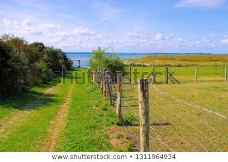 зеленый пастбище острове Германия пейзаж Сток-фото © LianeM