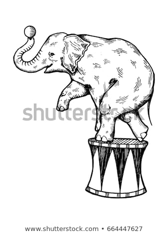 circus elephant cartoon hand drawn style Stock photo © amaomam