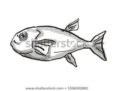 Brownback Toadfish Australian Fish Cartoon Retro Drawing Stock photo © patrimonio
