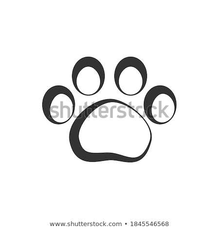 Tiger paws, steps imprints, simple black silhouette Stock photo © evgeny89