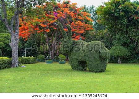 ガーデニング 緑 造園 開花 ツリー 芝生 ストックフォト © robuart