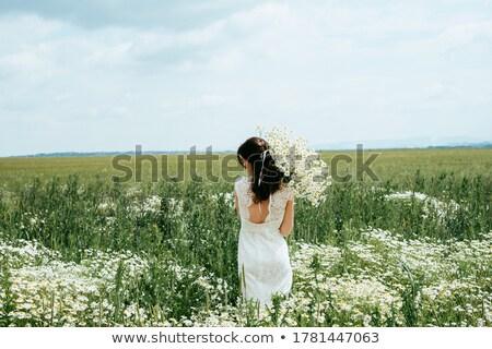 fioritura · trifoglio · campo · vicino · view · nuvoloso - foto d'archivio © lypnyk2