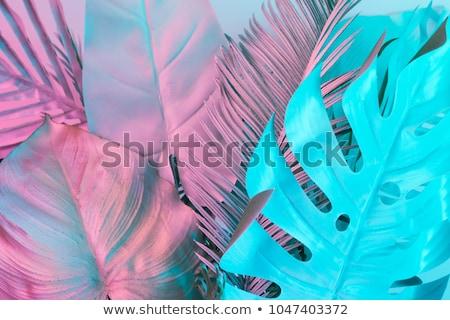 оригинальный цвета аннотация дизайна черный волна Сток-фото © Iscatel