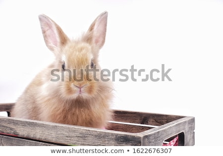 baby looking into wooden box Stock photo © gewoldi