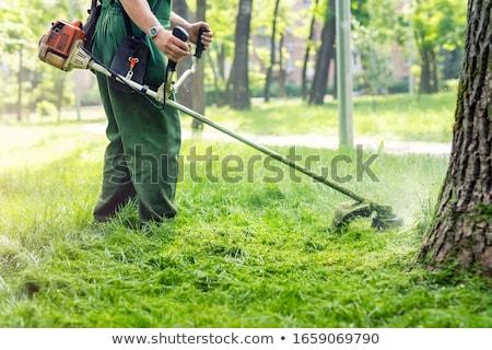 Lawnmower And Grass Stock photo © adamson