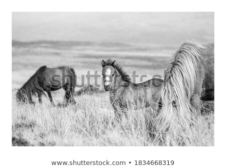 grazing mare and her foal Stock photo © artush