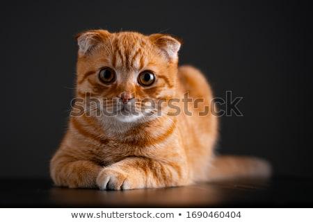 赤 · 猫 · 座って · 階 · 自然 · 背景 - ストックフォト © papa1266