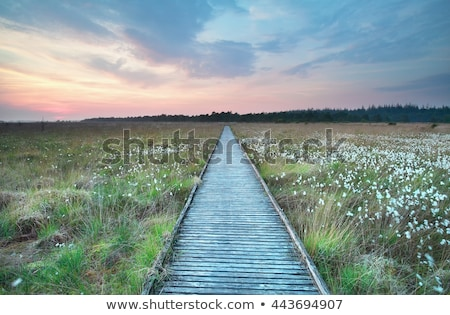 A wooden path in the marsh  Stock photo © michaklootwijk