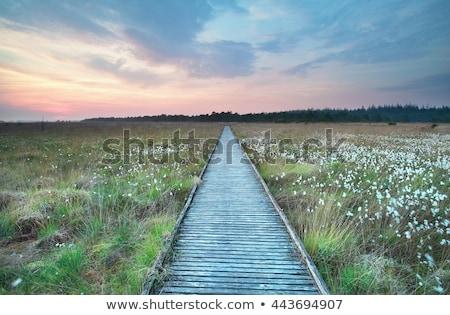 punt · park · Canada · hout · natuur - stockfoto © michaklootwijk