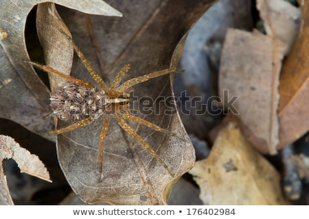 Wolf Spider Dead Stock photo © saje