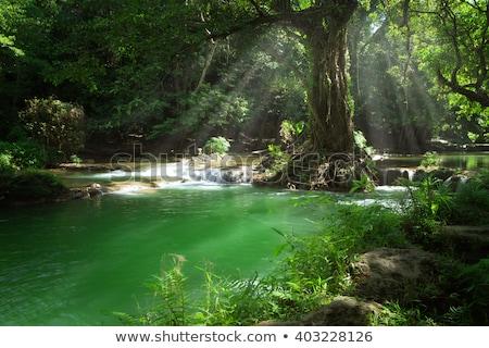 зеленый · лес · воды · дерево · весны - Сток-фото © jonnysek