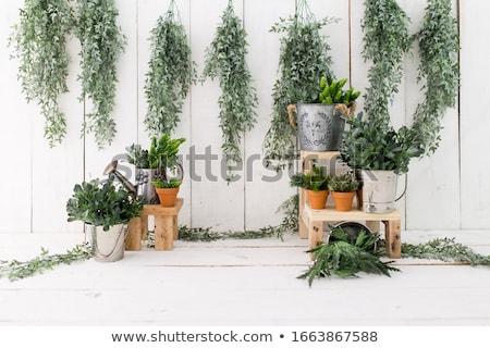 intérieur · échelle · nouvellement · outils · étage · bois - photo stock © badmanproduction
