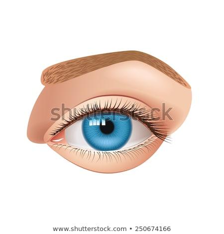 blue human eye, vector Stock photo © beaubelle