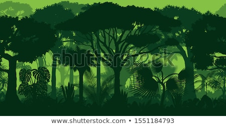 熱帯雨林 木 美 世界 遺産 森林 ストックフォト © clearviewstock