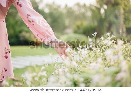 女の子 ピッキング アップ 花 フィールド ストックフォト © jeancliclac