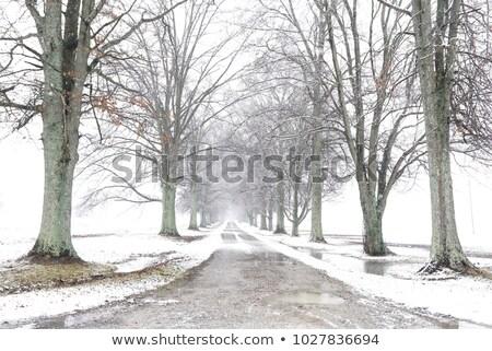 Tree-lined driveway stock photo © sarahdoow