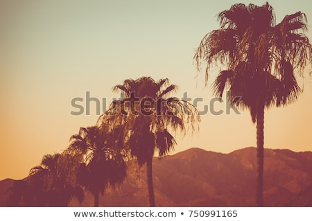 Pôr do sol montanhas folhas de palmeira deserto belo férias Foto stock © anmalkov