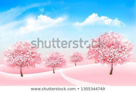 Magnólia árvore flor blue sky céu flor Foto stock © wime