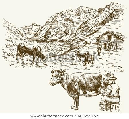 Herd of cows grazing in Alps Stock photo © natika
